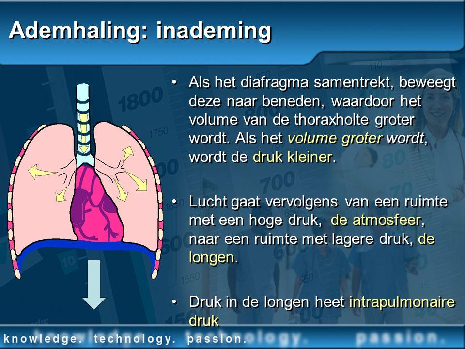 Ademhaling: inademing Als het diafragma samentrekt, beweegt deze naar beneden, waardoor het volume van de thoraxholte groter wordt. Als het volume gro