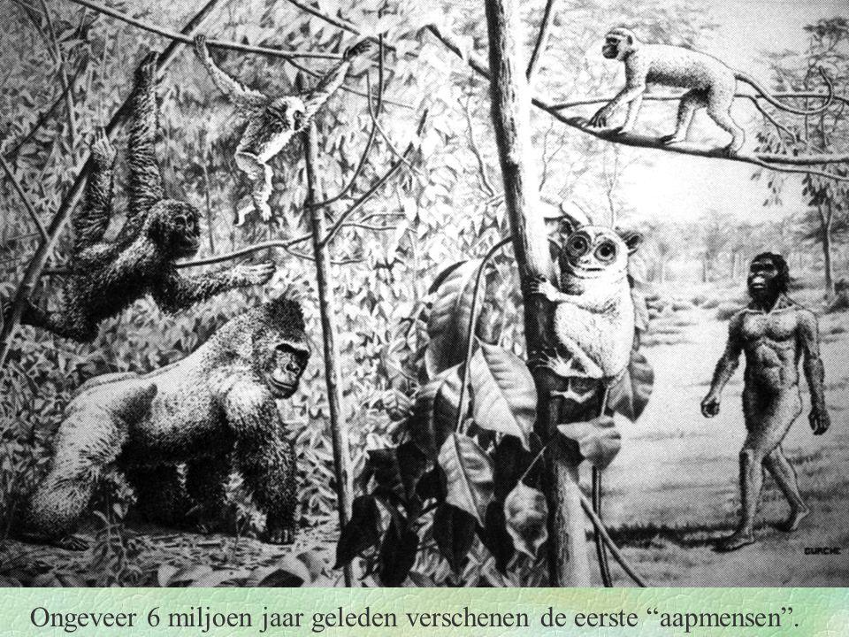 """Ongeveer 6 miljoen jaar geleden verschenen de eerste """"aapmensen""""."""