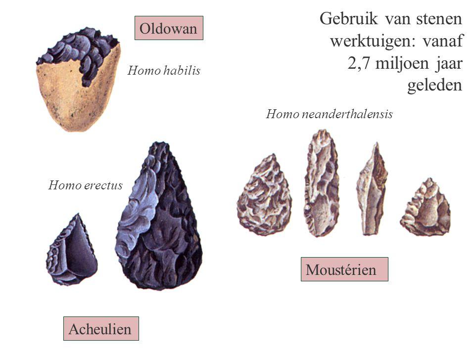 Oldowan Acheulien Moustérien Homo habilis Homo erectus Homo neanderthalensis Gebruik van stenen werktuigen: vanaf 2,7 miljoen jaar geleden