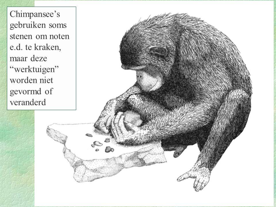 """Figure 11.41 Chimpansee's gebruiken soms stenen om noten e.d. te kraken, maar deze """"werktuigen"""" worden niet gevormd of veranderd"""