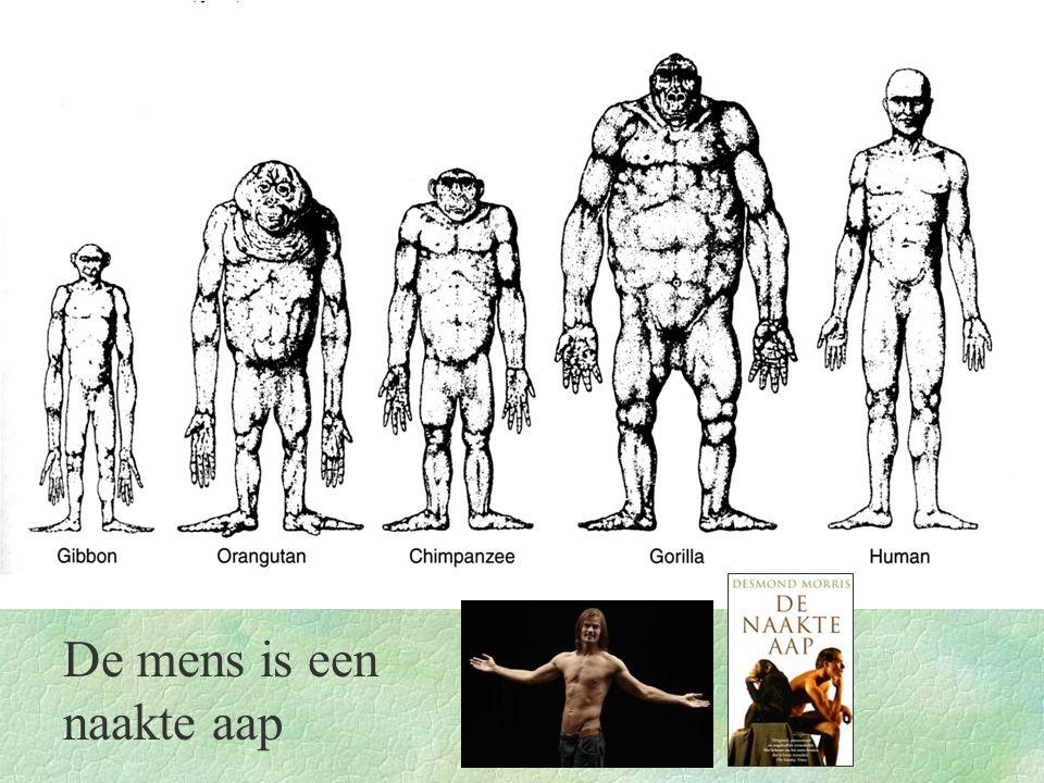 Evolutielijnen binnen de primaten Halfapen Echte apen Mensapen Maki'sLori's Spookdiertjes Apen van de nieuwe wereld Apen van de oude wereld Eerste primaten