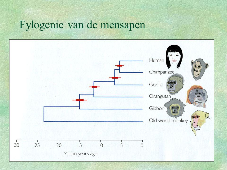 Fylogenie van de homininen Homininen: subfamilie van de Hominidae Definiërende kenmerk: bipedalisme Ontstaan 6-7 My BP In totaal 8 Homo-soorten en 9 niet-Homo homininen Recente vondsten brengen het aantal soorten homi- ninen op 24.
