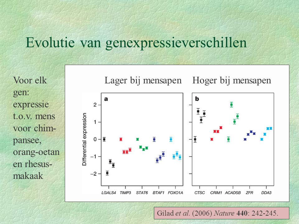 Evolutie van genexpressieverschillen Gilad et al. (2006) Nature 440: 242-245. Voor elk gen: expressie t.o.v. mens voor chim- pansee, orang-oetan en rh