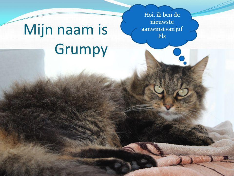 Mijn naam is Grumpy Hoi, ik ben de nieuwste aanwinst van juf Els