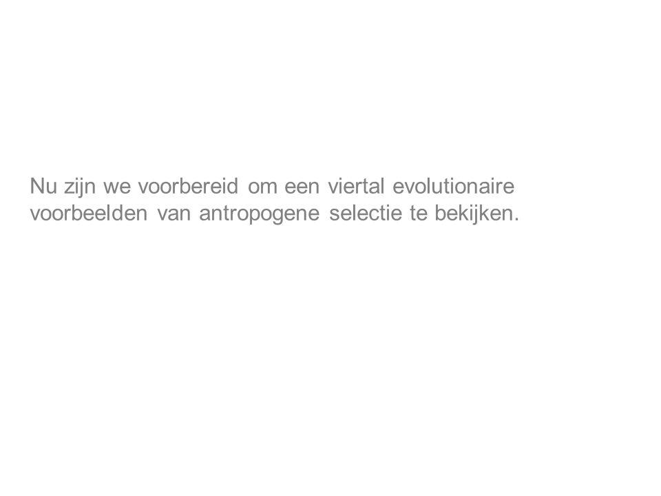 Nu zijn we voorbereid om een viertal evolutionaire voorbeelden van antropogene selectie te bekijken.