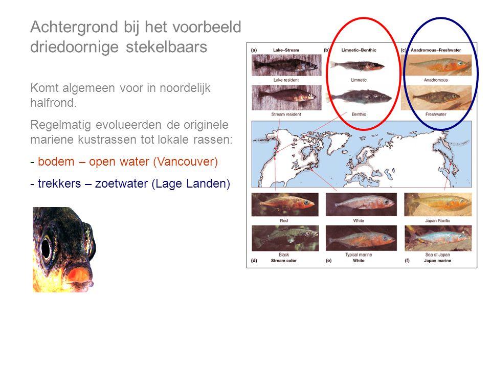 Achtergrond bij het voorbeeld driedoornige stekelbaars Komt algemeen voor in noordelijk halfrond.