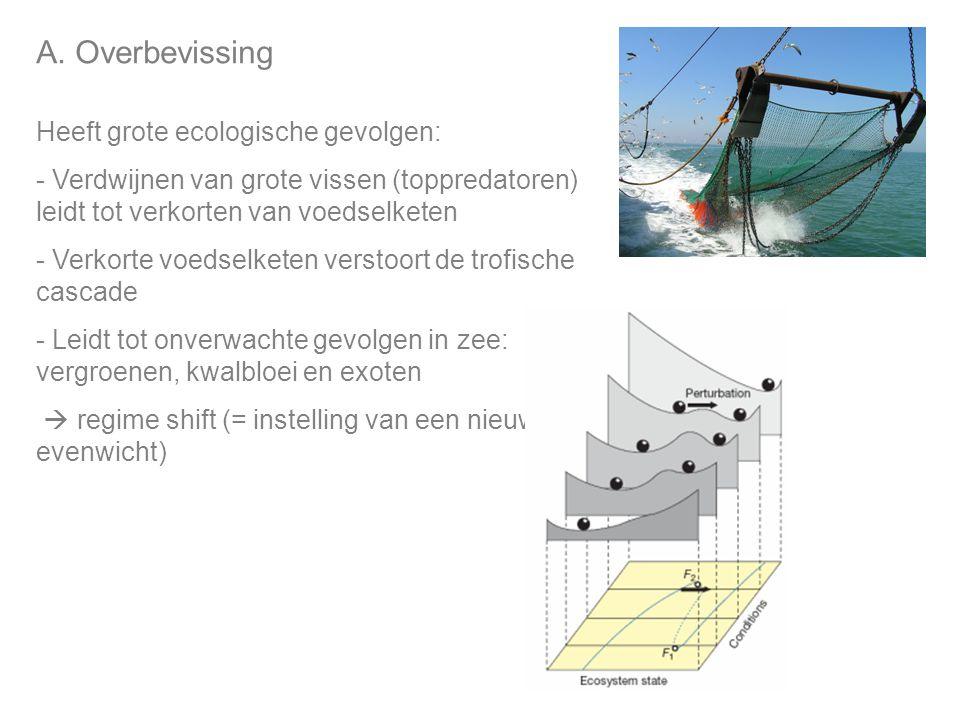 A. Overbevissing Heeft grote ecologische gevolgen: - Verdwijnen van grote vissen (toppredatoren) leidt tot verkorten van voedselketen - Verkorte voeds