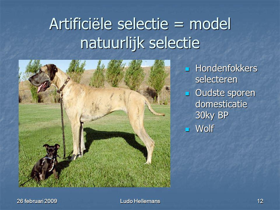 26 februari 2009Ludo Hellemans12 Artifici ë le selectie = model natuurlijk selectie Hondenfokkers selecteren Hondenfokkers selecteren Oudste sporen domesticatie 30ky BP Oudste sporen domesticatie 30ky BP Wolf Wolf