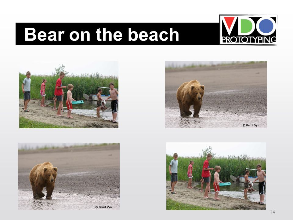 14 Bear on the beach