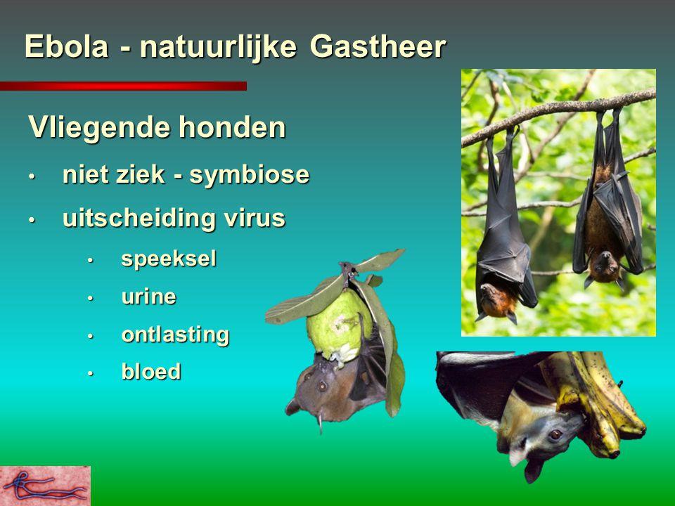 Ebola - natuurlijke Gastheer Vliegende honden niet ziek - symbiose niet ziek - symbiose uitscheiding virus uitscheiding virus speeksel speeksel urine