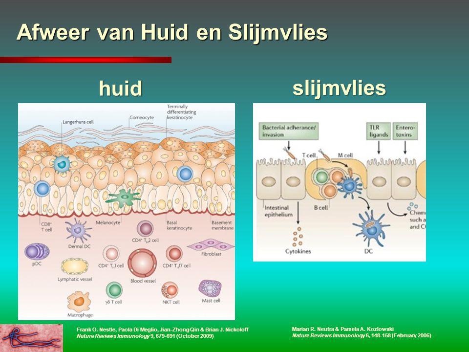 Afweer van Huid en Slijmvlies huid slijmvlies Marian R. Neutra & Pamela A. Kozlowski Nature Reviews Immunology 6, 148-158 (February 2006) Frank O. Nes