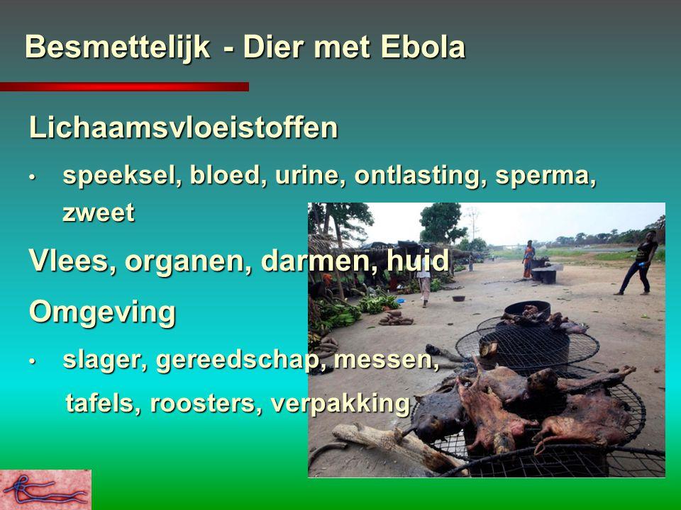 Besmettelijk - Dier met Ebola Lichaamsvloeistoffen speeksel, bloed, urine, ontlasting, sperma, zweet speeksel, bloed, urine, ontlasting, sperma, zweet