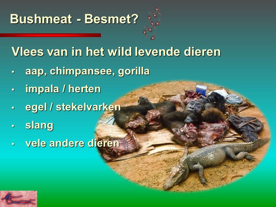 Bushmeat - Besmet? Vlees van in het wild levende dieren aap, chimpansee, gorilla aap, chimpansee, gorilla impala / herten impala / herten egel / steke