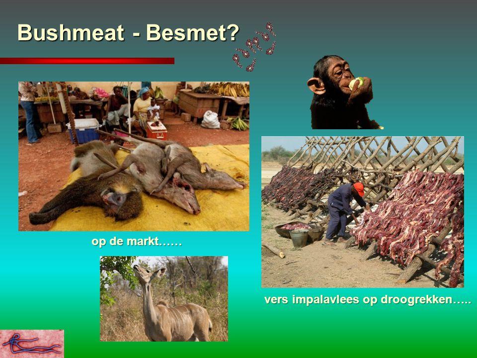 Bushmeat - Besmet? op de markt…… vers impalavlees op droogrekken….. vers impalavlees op droogrekken…..