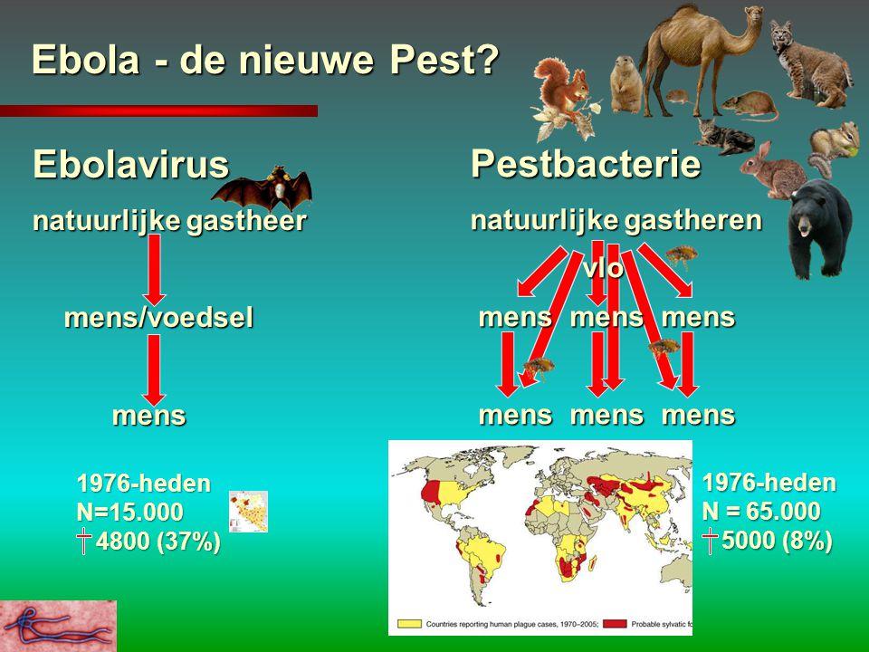 Ebola - de nieuwe Pest? Ebolavirus natuurlijke gastheer mens/voedsel mens/voedsel mens mens Pestbacterie natuurlijke gastheren vlo vlo mens mens mens