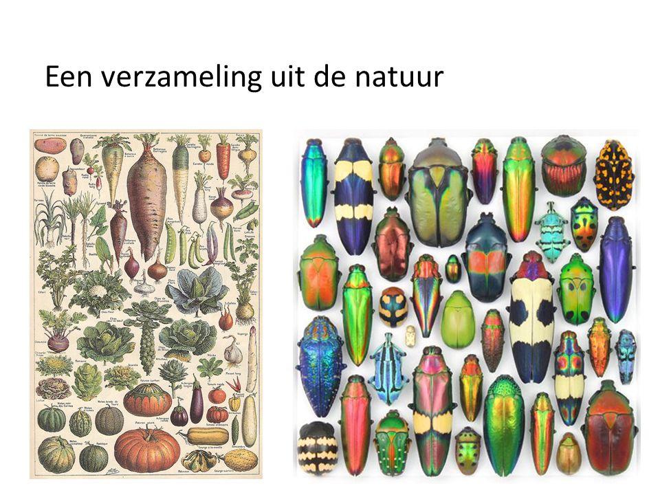 Een verzameling uit de natuur