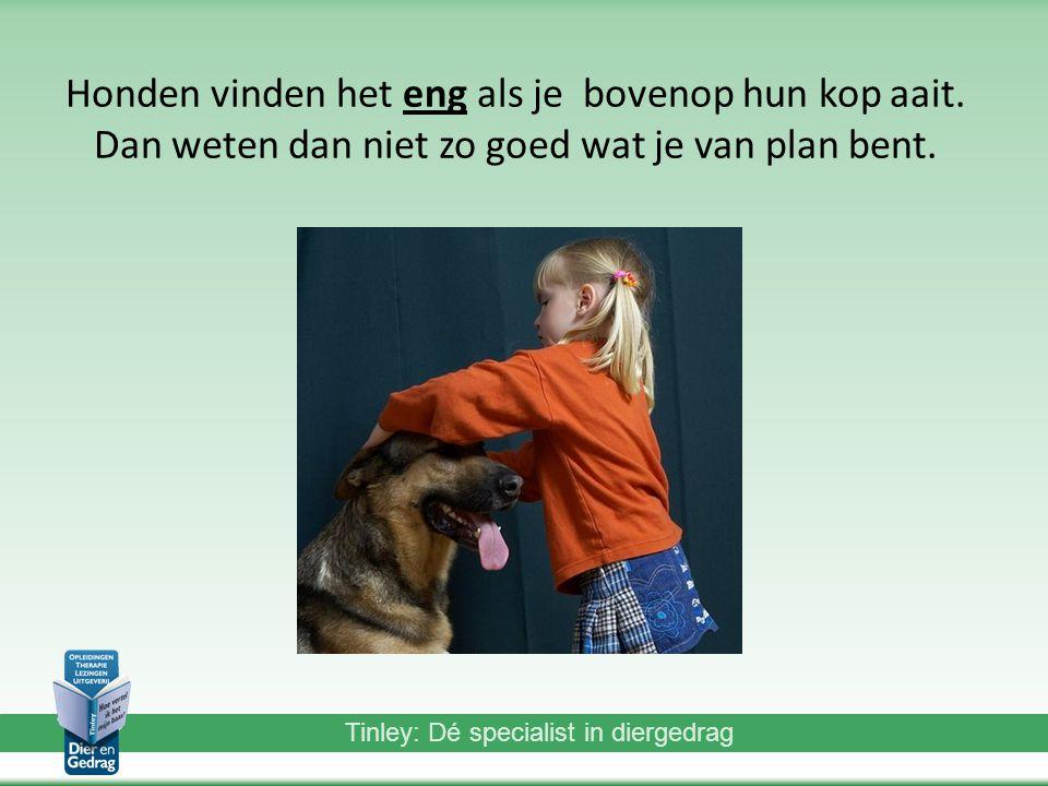 Tinley: Dé specialist in diergedrag Honden vinden het eng als je bovenop hun kop aait.