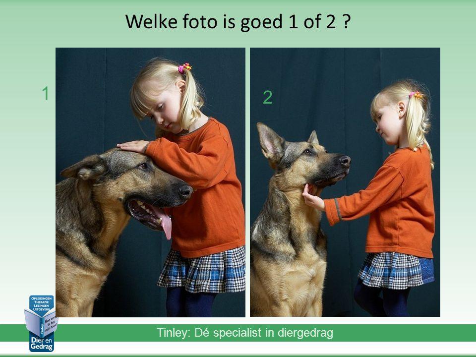 Tinley: Dé specialist in diergedrag Welke foto is goed 1 of 2 ? 1 2
