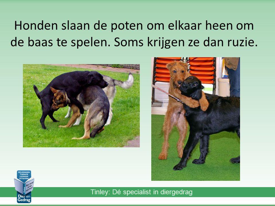 Tinley: Dé specialist in diergedrag Honden slaan de poten om elkaar heen om de baas te spelen.