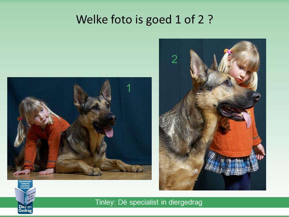 Tinley: Dé specialist in diergedrag Welke foto is goed 1 of 2 ? 2 1