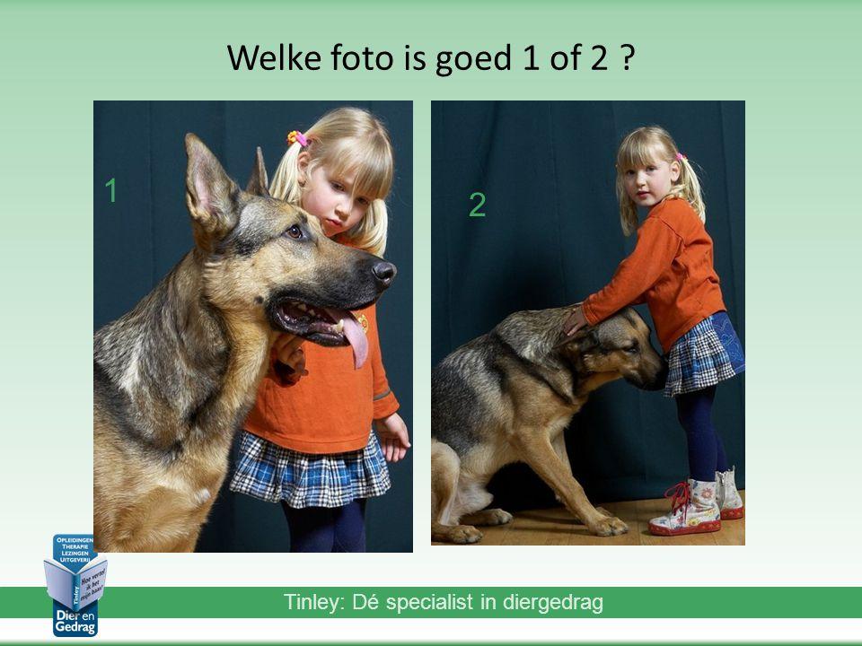 Tinley: Dé specialist in diergedrag Welke foto is goed 1 of 2 ? 1 2 2