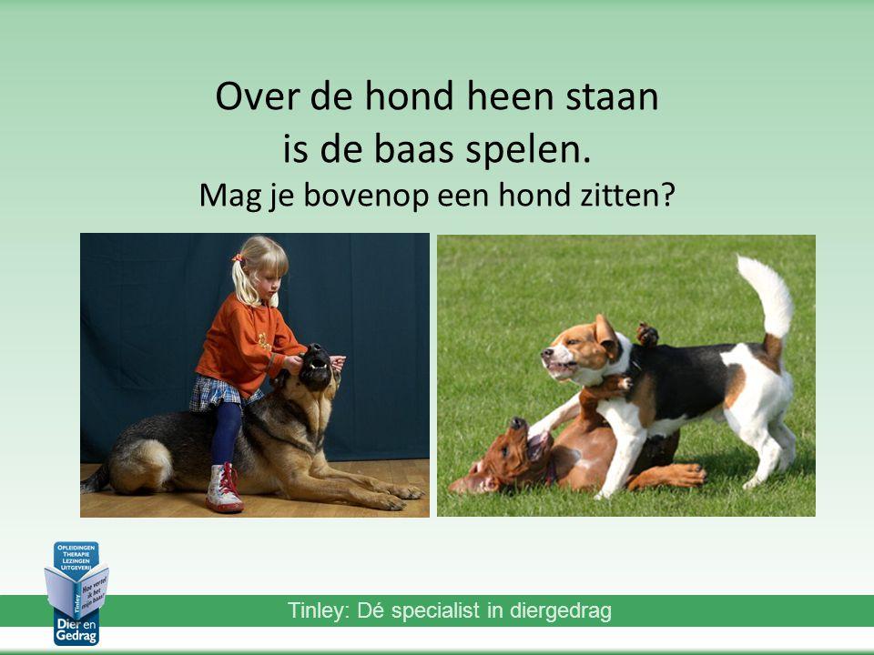 Tinley: Dé specialist in diergedrag Over de hond heen staan is de baas spelen.