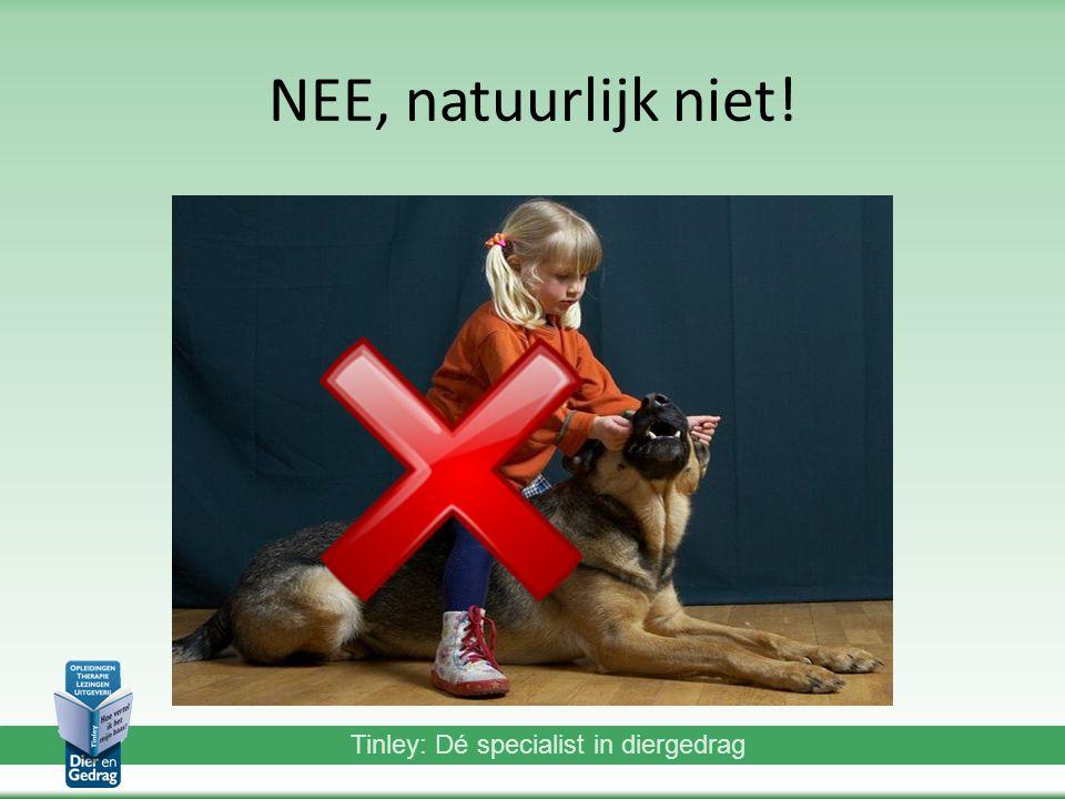 Tinley: Dé specialist in diergedrag NEE, natuurlijk niet!