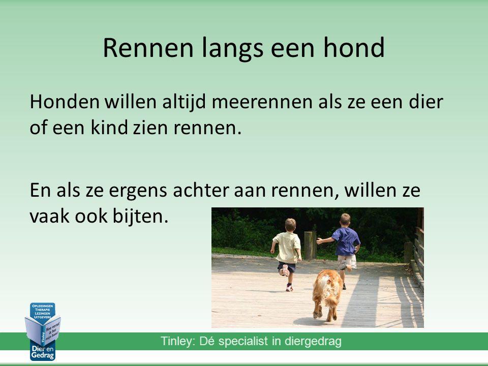 Tinley: Dé specialist in diergedrag Rennen langs een hond Honden willen altijd meerennen als ze een dier of een kind zien rennen.