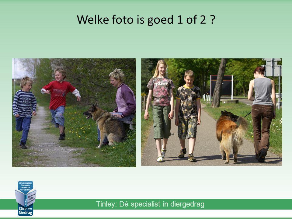 Tinley: Dé specialist in diergedrag Welke foto is goed 1 of 2 ?