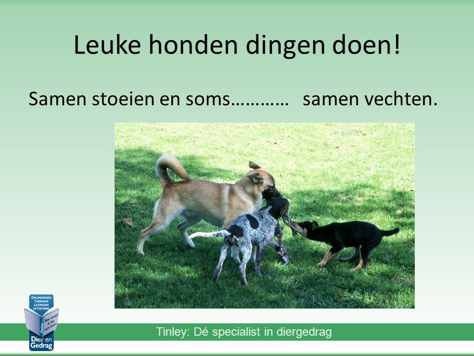 Tinley: Dé specialist in diergedrag Leuke honden dingen doen.