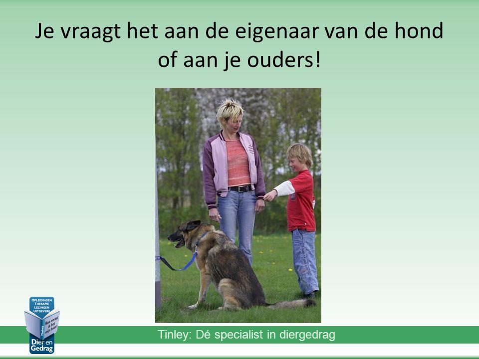 Tinley: Dé specialist in diergedrag Je vraagt het aan de eigenaar van de hond of aan je ouders!