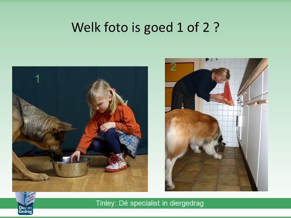 Tinley: Dé specialist in diergedrag Welk foto is goed 1 of 2 ? 1 2