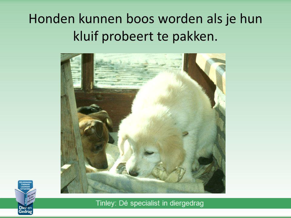 Tinley: Dé specialist in diergedrag Honden kunnen boos worden als je hun kluif probeert te pakken.
