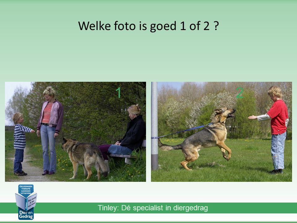 Tinley: Dé specialist in diergedrag Welke foto is goed 1 of 2 ? 12