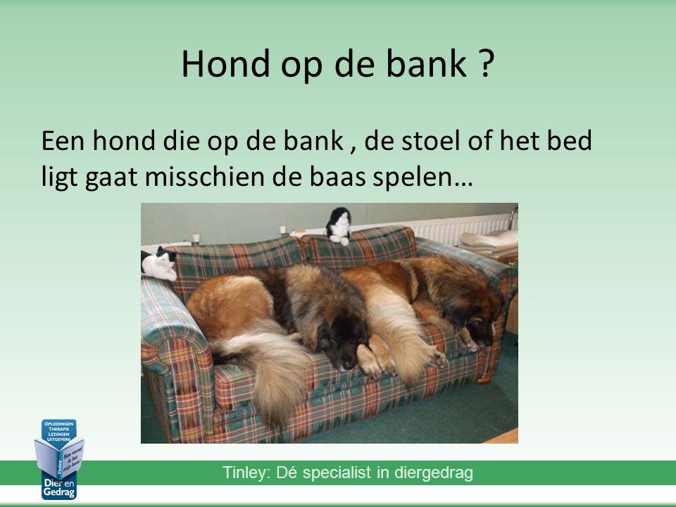 Tinley: Dé specialist in diergedrag Hond op de bank .