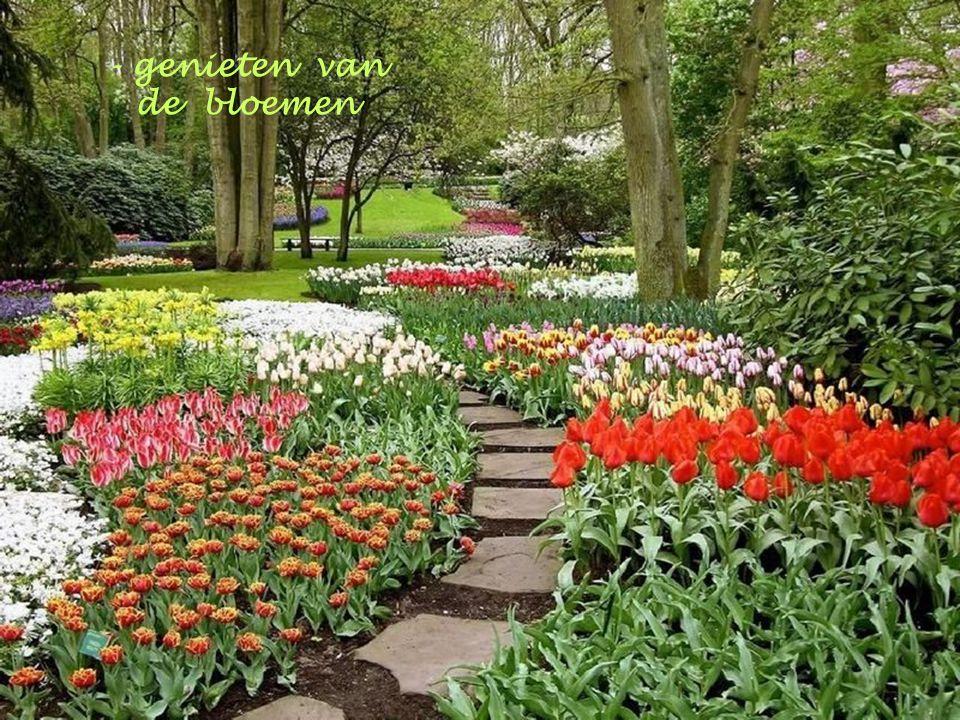 - genieten van de lentelucht
