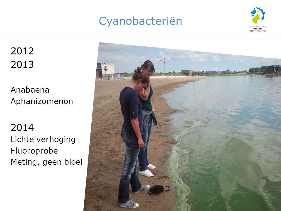 Cyanobacteriën 2012 2013 Anabaena Aphanizomenon 2014 Lichte verhoging Fluoroprobe Meting, geen bloei