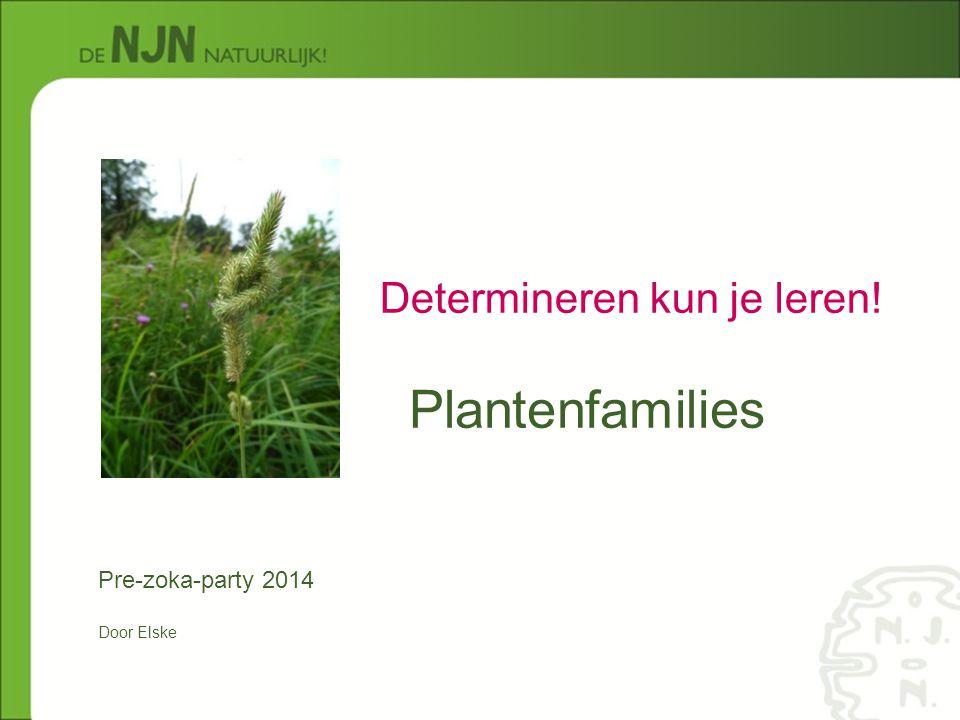 Plantenfamilies Determineren kun je leren! Pre-zoka-party 2014 Door Elske