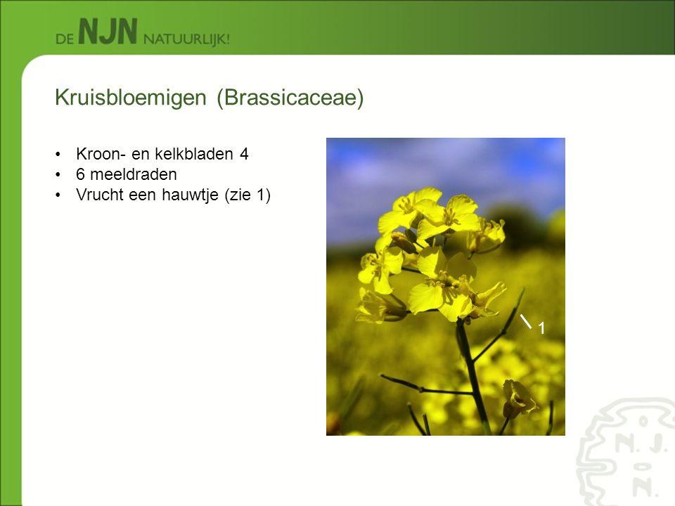 Kruisbloemigen (Brassicaceae) Kroon- en kelkbladen 4 6 meeldraden Vrucht een hauwtje (zie 1) 1