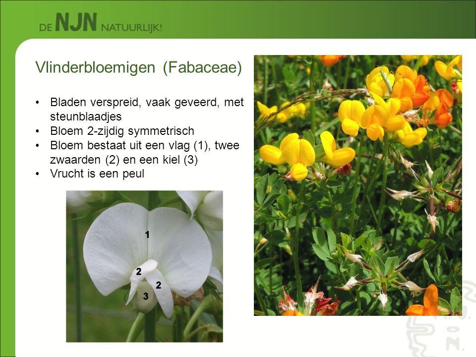 Vlinderbloemigen (Fabaceae) Bladen verspreid, vaak geveerd, met steunblaadjes Bloem 2-zijdig symmetrisch Bloem bestaat uit een vlag (1), twee zwaarden