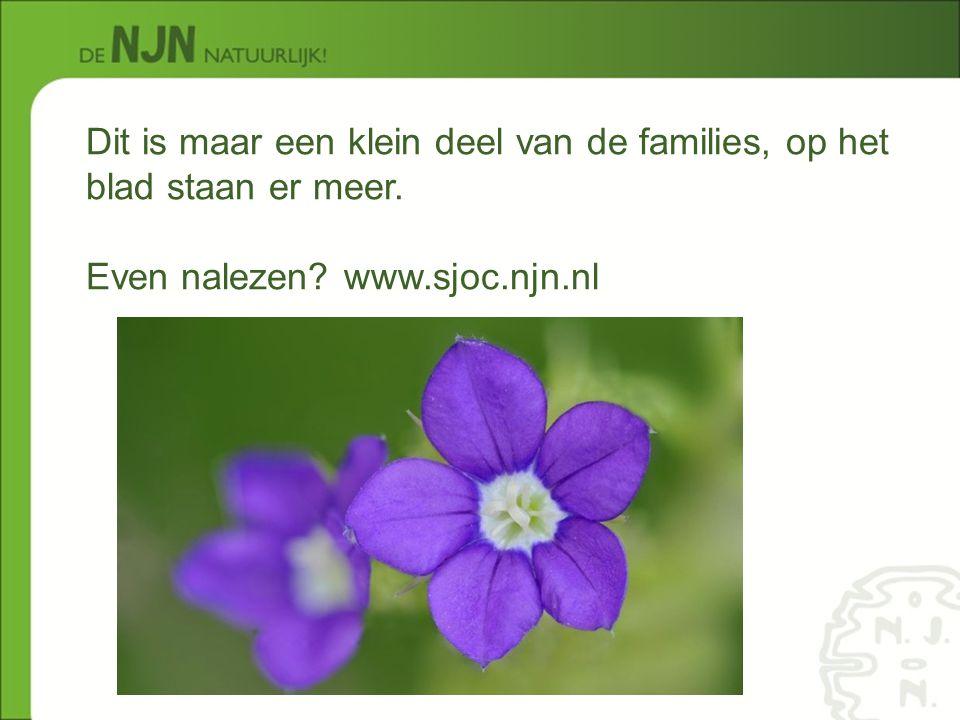 Dit is maar een klein deel van de families, op het blad staan er meer. Even nalezen? www.sjoc.njn.nl