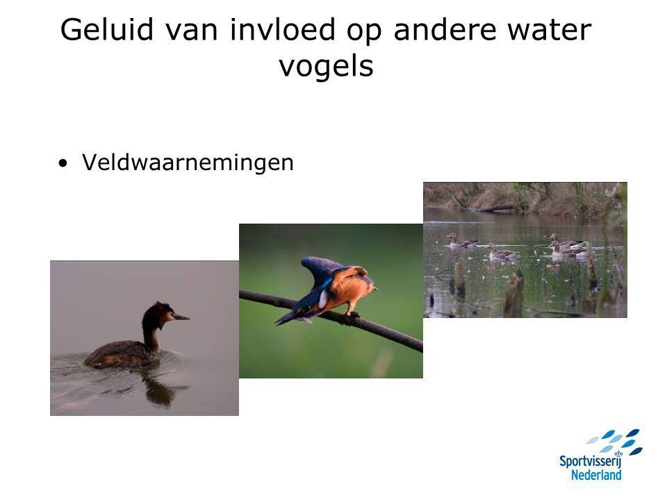 Geluid van invloed op andere water vogels Veldwaarnemingen