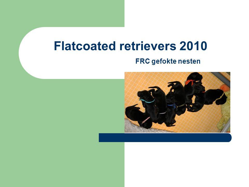 Flatcoated retrievers 2010 FRC gefokte nesten