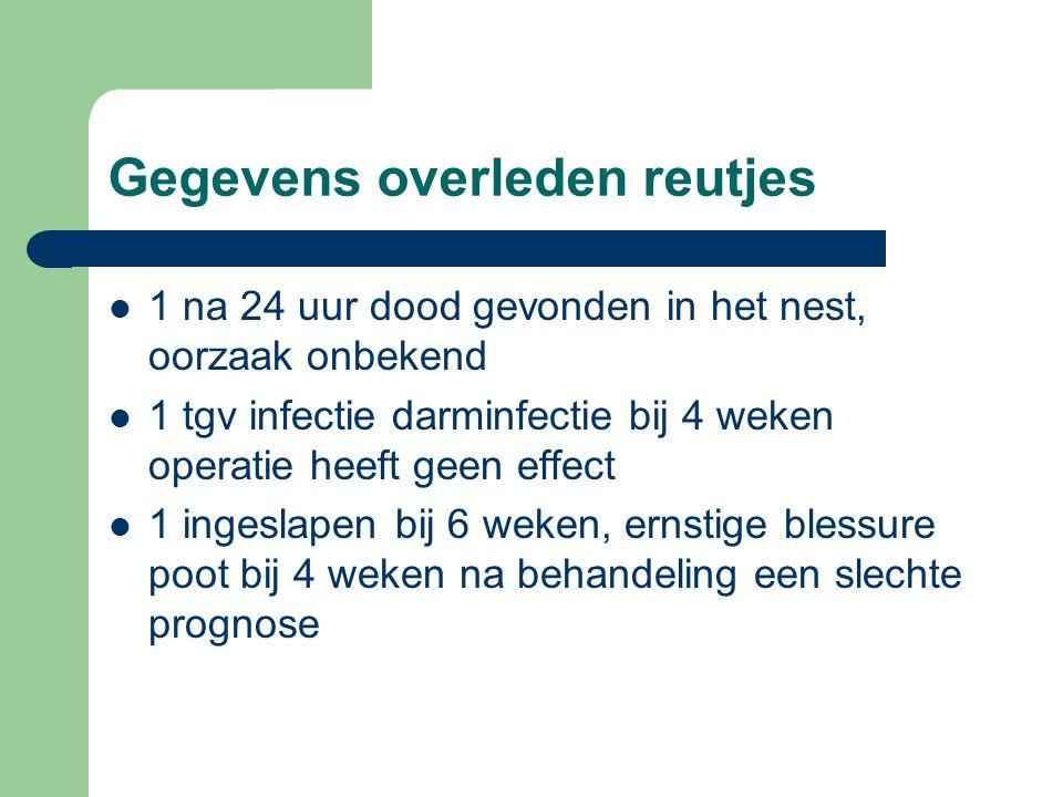 Gegevens overleden reutjes 1 na 24 uur dood gevonden in het nest, oorzaak onbekend 1 tgv infectie darminfectie bij 4 weken operatie heeft geen effect