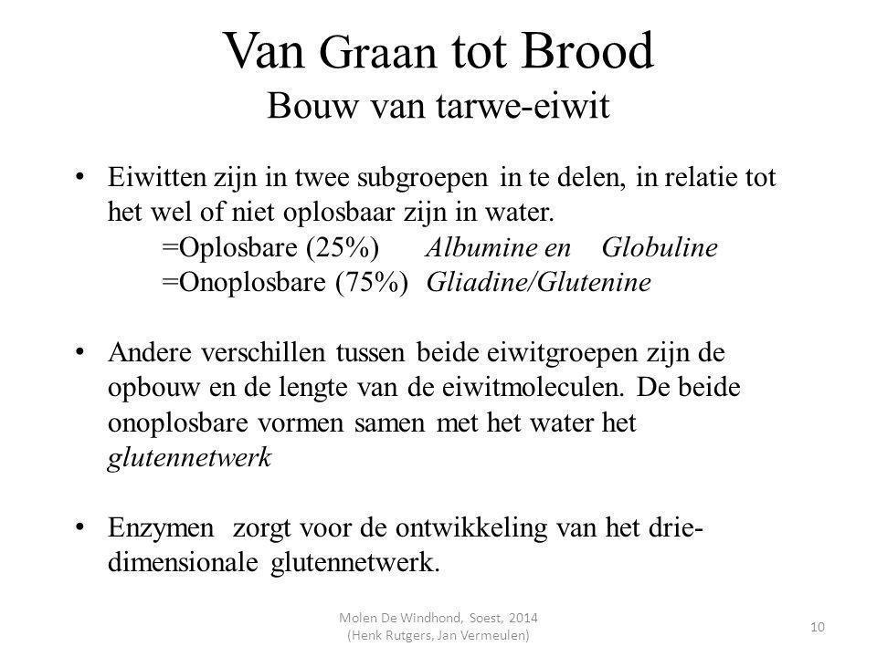 Van Graan tot Brood Bouw van tarwe-eiwit Eiwitten zijn in twee subgroepen in te delen, in relatie tot het wel of niet oplosbaar zijn in water. =Oplosb