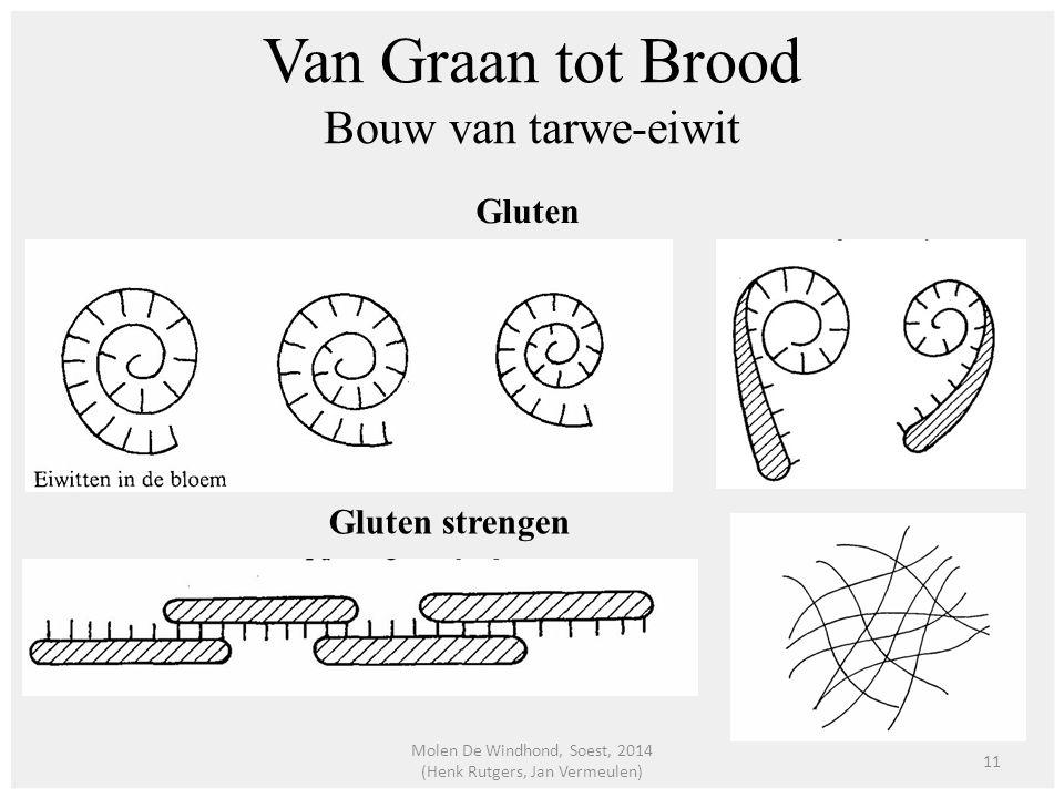 Van Graan tot Brood Bouw van tarwe-eiwit Gluten Gluten strengen 11 Molen De Windhond, Soest, 2014 (Henk Rutgers, Jan Vermeulen)