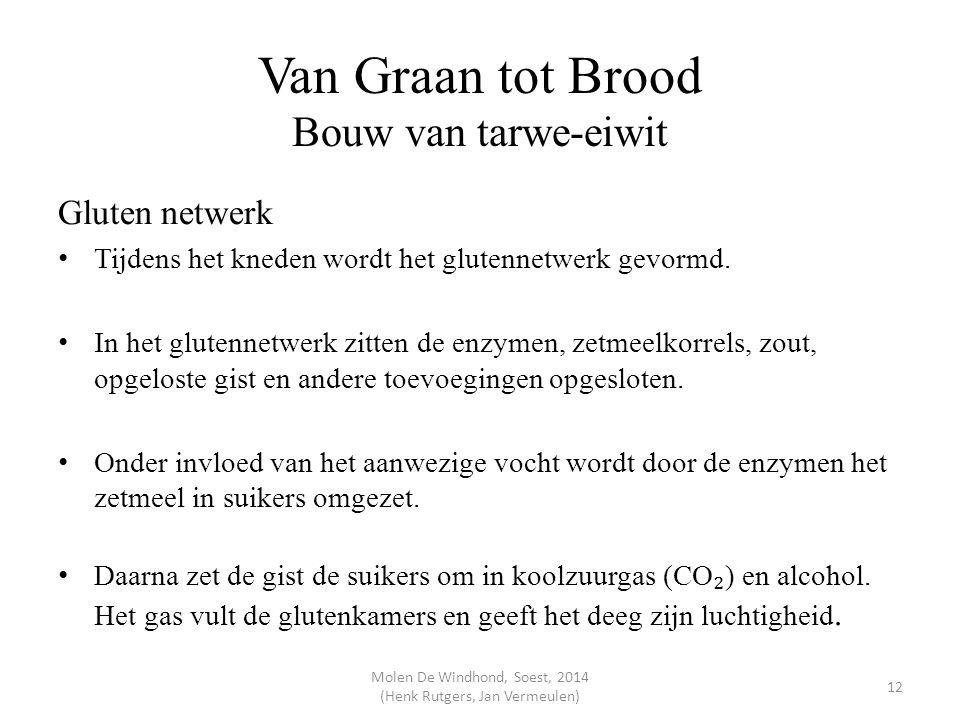 Van Graan tot Brood Bouw van tarwe-eiwit Gluten netwerk Tijdens het kneden wordt het glutennetwerk gevormd. In het glutennetwerk zitten de enzymen, ze