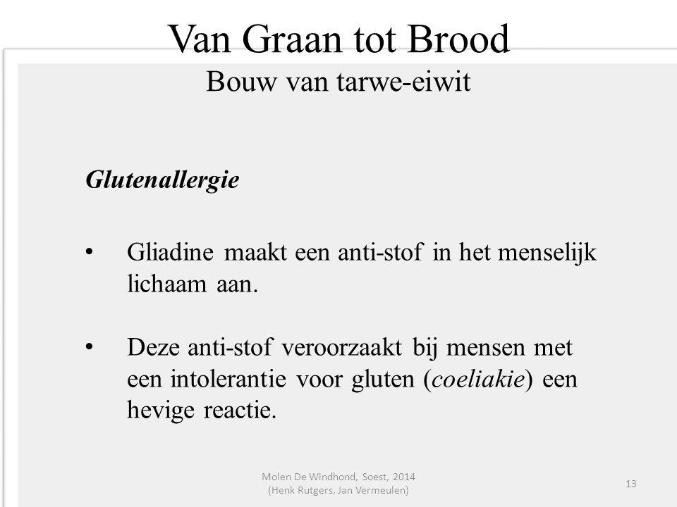 Van Graan tot Brood Bouw van tarwe-eiwit Glutenallergie Gliadine maakt een anti-stof in het menselijk lichaam aan. Deze anti-stof veroorzaakt bij mens