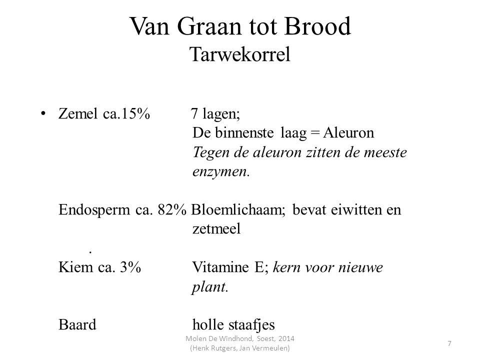 Van Graan tot Brood Tarwekorrel Zemel ca.15% 7 lagen; De binnenste laag = Aleuron Tegen de aleuron zitten de meeste enzymen. Endosperm ca. 82% Bloemli