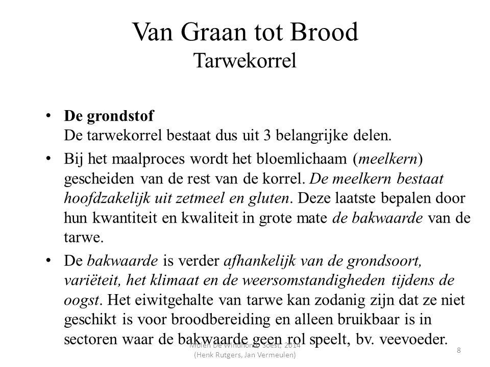 Van Graan tot Brood Tarwekorrel De grondstof De tarwekorrel bestaat dus uit 3 belangrijke delen. Bij het maalproces wordt het bloemlichaam (meelkern)